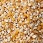 河南玉米 爆玉米花原料  玉米粒 黄玉米  五谷杂粮 500g